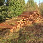 Thinning, Logs,