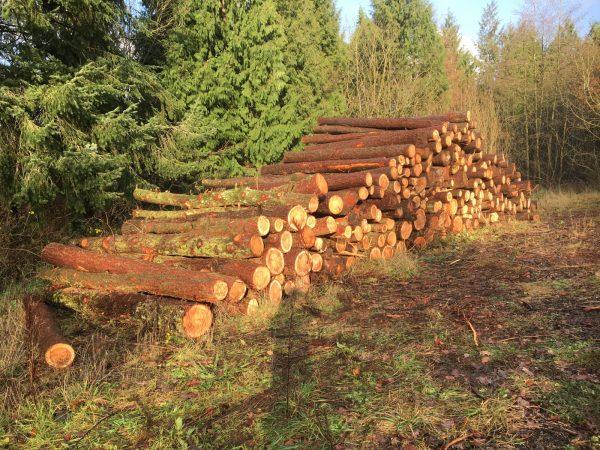 Thinning, Logs,